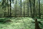 Poland_Bialowieza