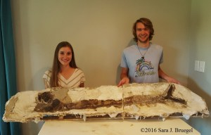 The Gillicus fish fossil from Kansas finished with the longest stages of excavation