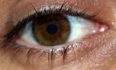 CS4K-Brown-eye