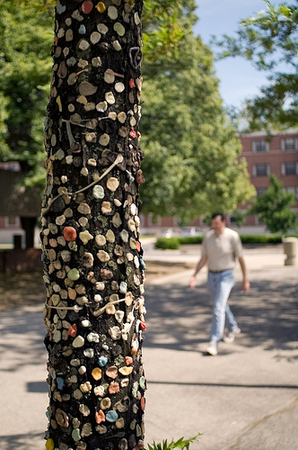 Gum stuck to tree