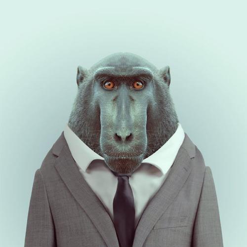 Zoo-Portraits-Yago-Partal-11