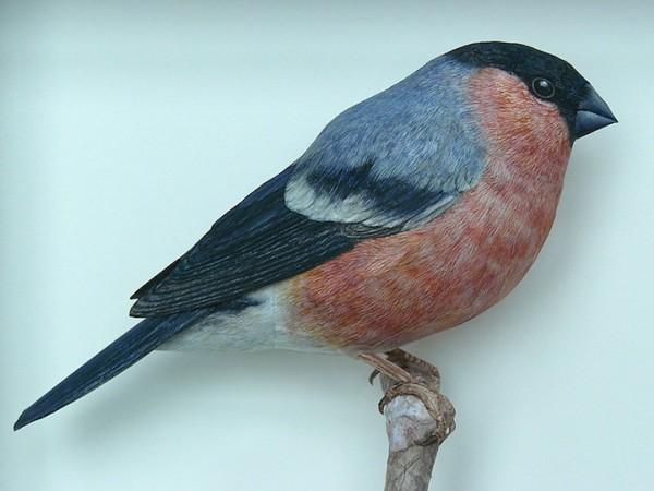 papercraftbirds03