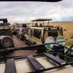 Real Safari
