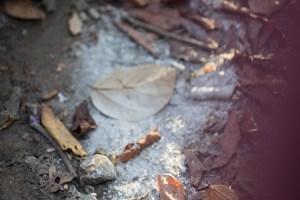 Komodo Poop
