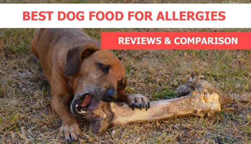 Large Of Best Dogs For Allergies