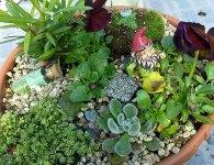 fairy-garden-dish