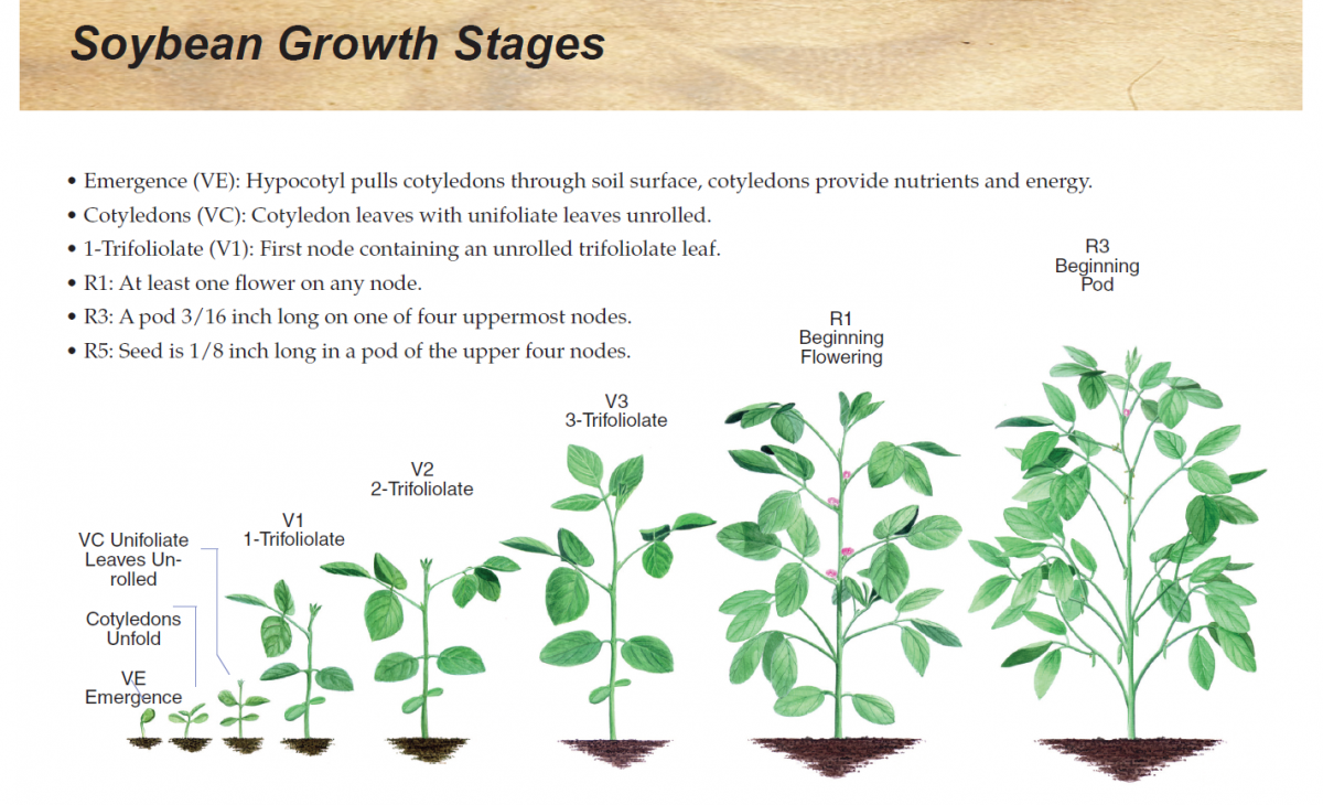 Diagram Of Plant Growth Stages Manual Guide