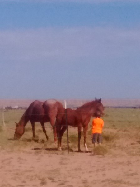 My daughter with a neighbor's free range horses.