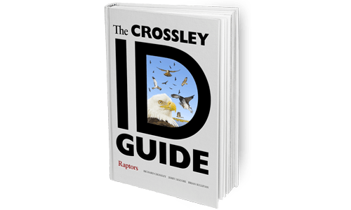 The-Crossley-ID-Guide_Raptors_Featured
