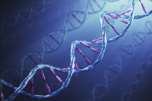 Winickoff  Advisor to National Academies of Sciences, Engineering, and Medicine Study on Gene Drives
