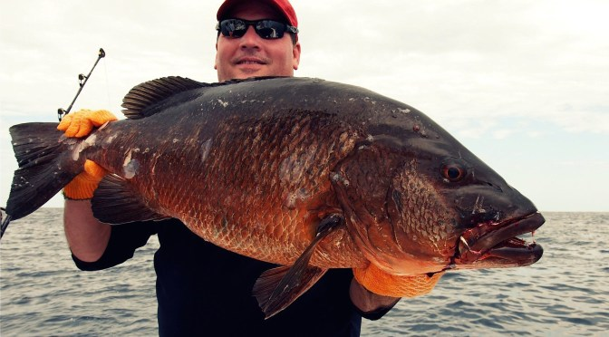 Cuban Fishing, 3-13-15, Cubera Snapper By Tom Hart, Via Creative Commons.