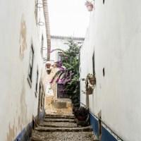 La poire Rocha, petit fruit savoureux du Portugal #2 [balade]