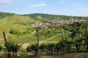 Vineyards outside Stuttgart, Wurttemberg, Germany