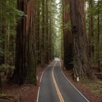 A Peek Into Humboldt County