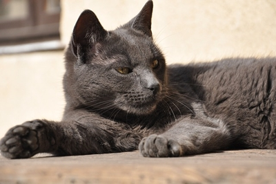 cat-559360_640