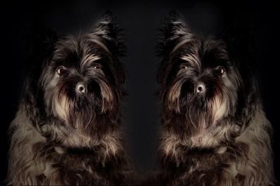 dog-715043_640