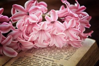 hyacinth-769193_640