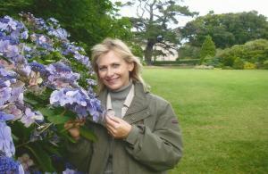 blue hydrangeas in Ireland