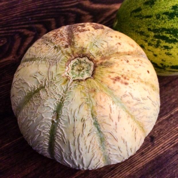 French Cantaloupe from Green City Market | FrannyCakes