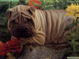 Wallpapers - Animales by Alms!! (168)