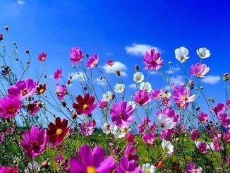 Curiosidades sobre la Primavera