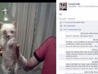 Un Perro Metido en una Botella causa revuelo en Facebook