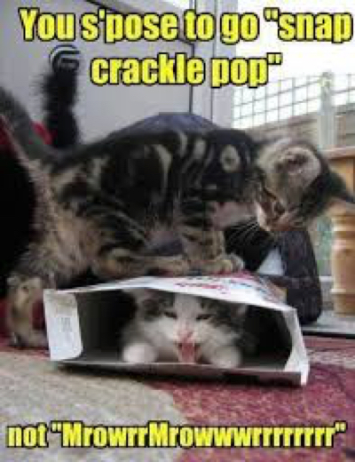 cat-funny