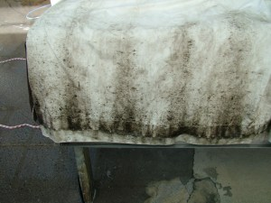 Very Mouldy Curtain ready for Cleaning. Mould is on blackout.