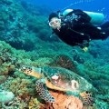Diving in Puerto Princesa