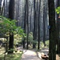 Juanda Forest Park in Bandung