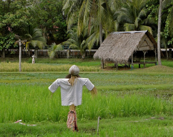 Laman Padi Rice Garden in Langkawi