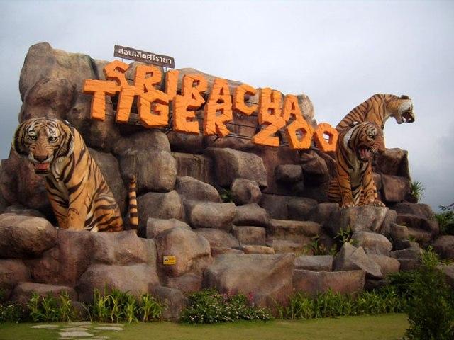 Sriracha Tiger Zoo in Pattaya