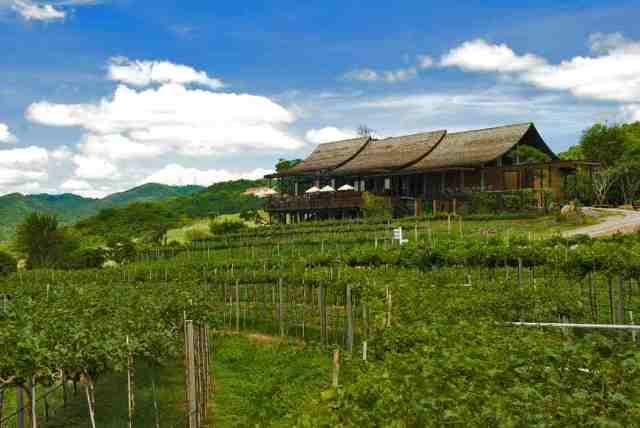 hua hin hills vineyard, thailand
