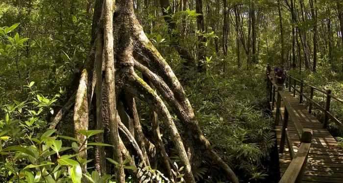 peradayan, forest, brunei