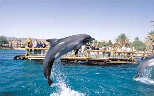 dolphin reef, eilat, israel
