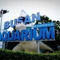 aquarium, busan, korea
