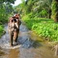 eco tours, elephant trek, krabi, thailand
