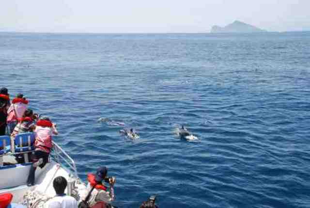 whale watching yilan, dolphin watching yilan