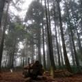 dongyanshan forest, taoyuan, tw