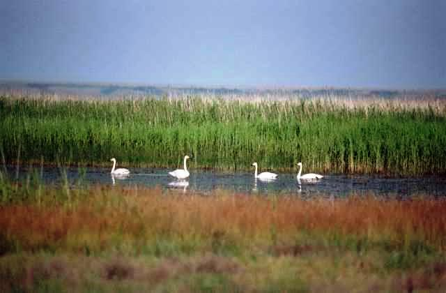 naurzum nature reserve, kazakhstan