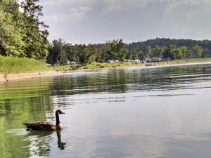 Beaver Lake Horseshoe Bend Cove
