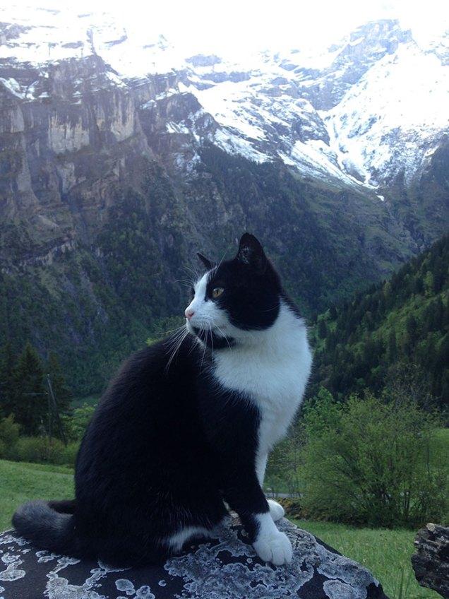 cat-guide-man-mountain-gimmelwald-switzerland-3