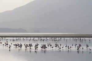 Spectacular Lake Natron