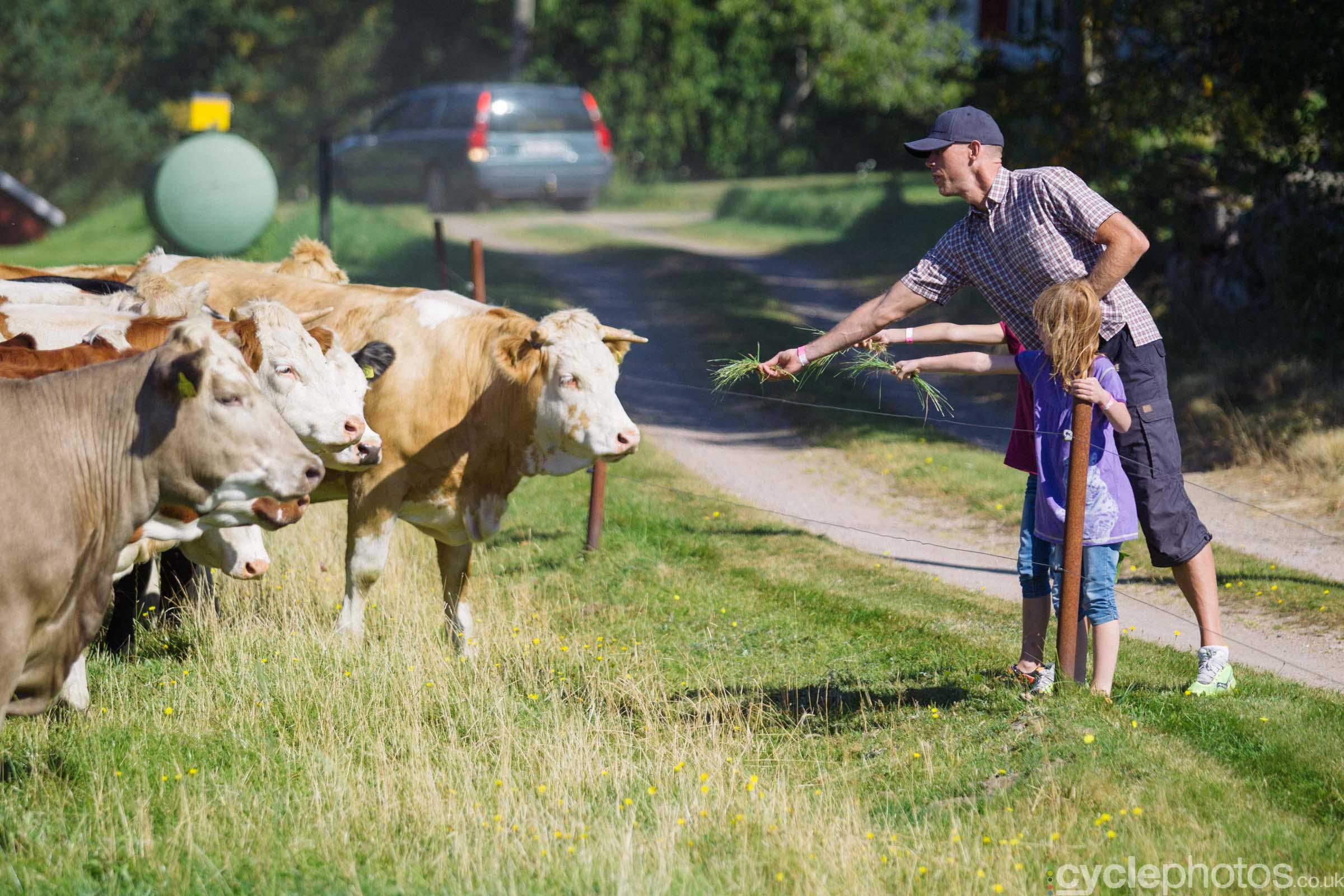cyclephotos-vargarda-103218-cows