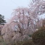 山形県 春に行きたい置賜桜の名所巡り旅はこちらからどうぞ