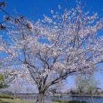 千葉県 春の銚子、醤油の町を訪ねる日帰り旅行はこちらから
