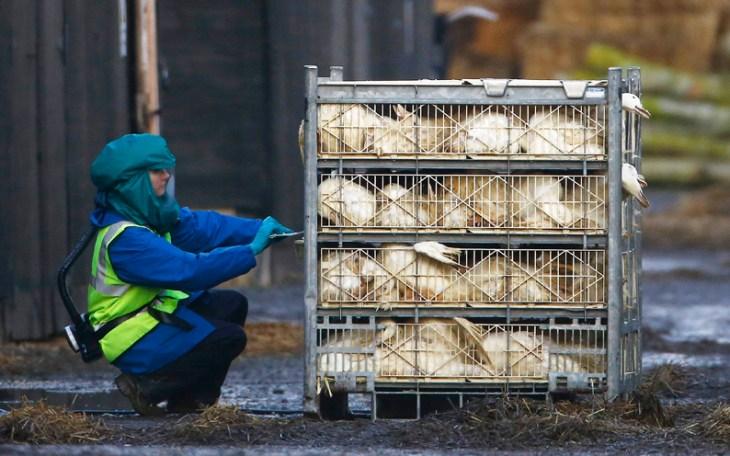 Britain confirms bird flu on northern English farm is H5N8 strain