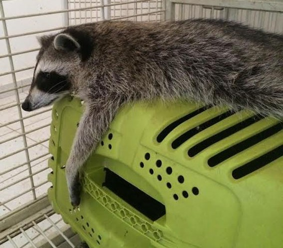 Exotic animals find new homes in Holland