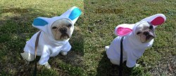 Formidable Spider Costume Pug Bunny Original French Bulldog Boston Terrier Pug Dog Froodies Hoodies Halloween Pug Frog Costume