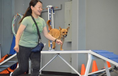 woman and dog using dag training equipment